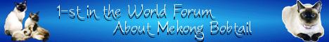 Форум о меконгских бобтейлах Сапфиры Меконга